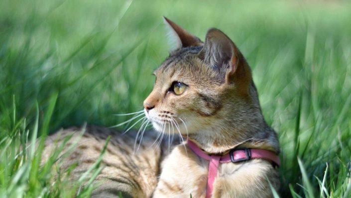 veterinarijos-paslaugos