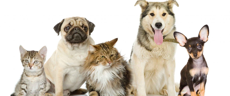 veterinarija24-apie