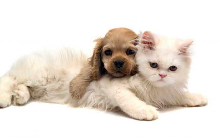 veterinarija24-apie2