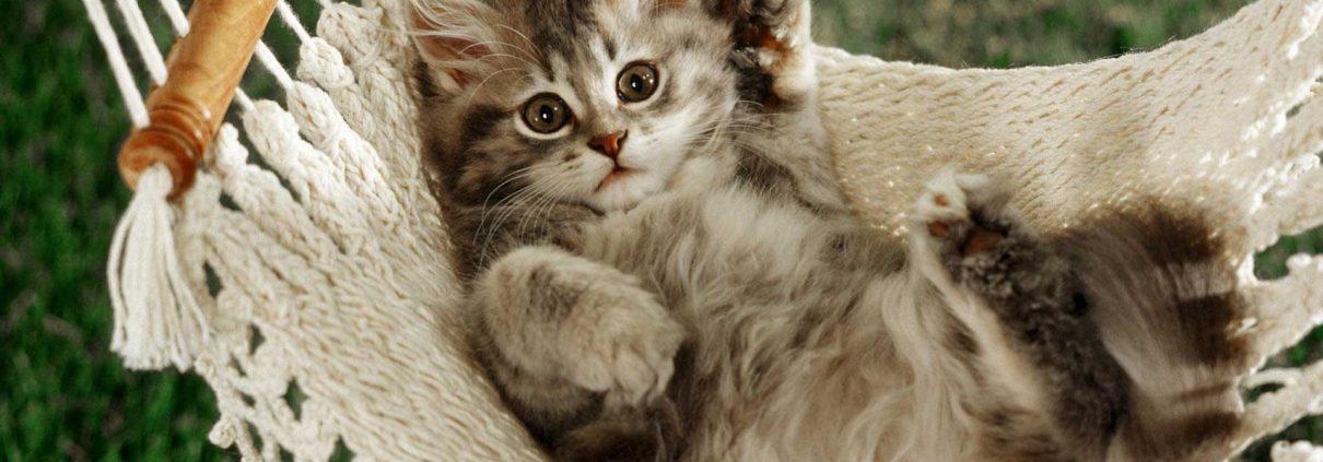 katinas-keliauninkas-veterinarija24